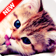 Kitten Wallpapers (app)