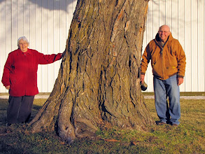 Photo: Anita Turner Rundquist and Jack Rundquist with the original Turner Titan Osage-orange planted on JB Turner's farm by Professor Turner himself. Turner was the person who initiated the planting of Osage-orange hedgerows throughout the Midwest beginning in the 1840s. The farm is still in the family (Anita is Turner's great-grand daughter) and they have granted us permission to name and propagate this historic tree with all proceeds going to Illinois College to help with expenses at Starhill Forest. The tree is male and thornless.