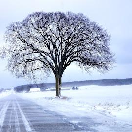 Brave Tree by Jennifer Clark - Landscapes Weather ( snow, tree )