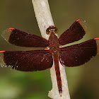 Ramburii – red parasol