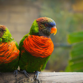 A Colorful Couple by Ravi Patel - Animals Birds ( bird, color )