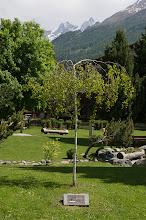 Photo: Zermatt Summit tree planted in 2010