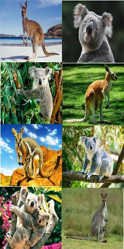 Kangaroo Koala Wallpaper