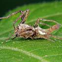 Spiked spider