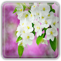 Spring Bloom Wallpapers icon