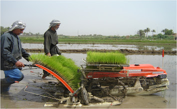 Photo: A mechanized transplanter at work, 2010 [Photo provided by  Khidir A. Hammed]