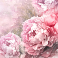 Vintage Roses Live Wallpaper icon