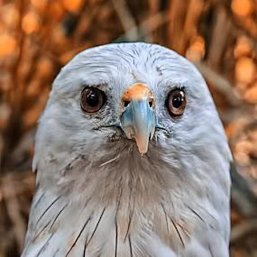 W I L D L I F E by Fammz Fammudin - Animals Birds ( bird, jungle, animal,  )