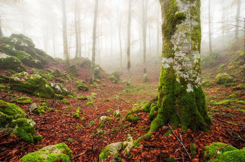 Il bosco Incantato di maurovtl