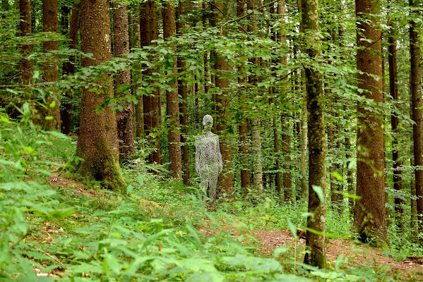 La creatura dei boschi di renzo brazzolotto