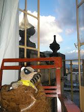Photo: dia 30.09: quati em seu pequeno trono conquistano, no centro da cidade histórica do méxico