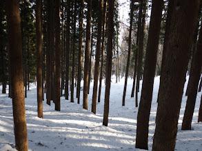 植林帯を越えると林道