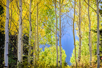 Photo: Sunrise with Scott backlit aspens are beautiful  Fall is my favorite so I got up early and went up into the canyons and did some fall colors. These were among some of the only Aspens turning colors right now. Which is awesome because that means I still have a bunch more fall ahead of me.  This morning in the mountains yep taken this morning All the other trees up in the mountains are changing so I can focus on them for now and practice getting really good with these aspens. Hard to get them nice and sharp and deal with the depth of field decisions when there are so many. Different than a portrait shoot that's for sure.  Shot this one at f/10 and I probably could have gone higher.  #blogged