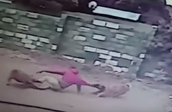WATCH | Alleged house robber jumps from roof into dogs' lair in Gansbaai - TimesLIVE