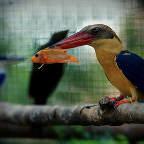 For Lunch by Ibe Lase - Animals Birds