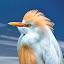 by Judy Rosanno - Animals Birds ( spring, march 2018, san antonio zoo,  )