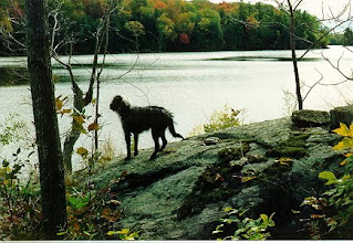Photo: Here is a picture of our dog overlooking the bay where we are building our log cabin.