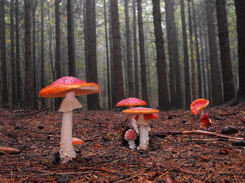 Il bosco delle fiabe di LucaMonego