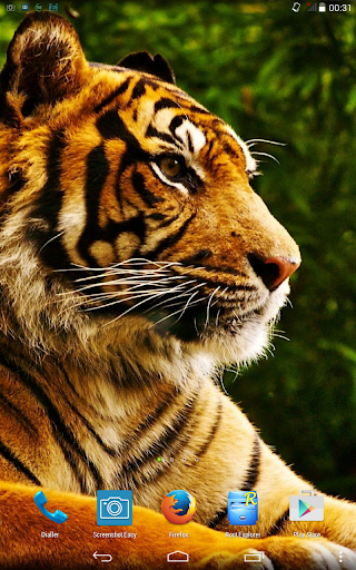 Tiger. Live wallpaper.