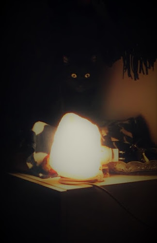 Lenny back cat di eraclea05
