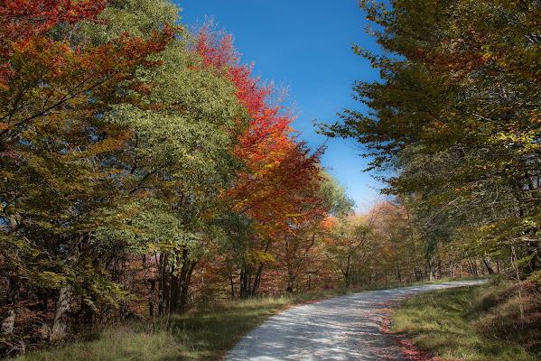 Una strada nei colori di enmaster