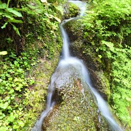 Splited water streamlet in the mountains by Svetlana Saenkova - Nature Up Close Water ( brook, split, water,  )