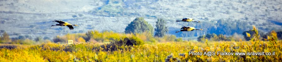 Экскурсия в долину Хула. Журавли. Израиль