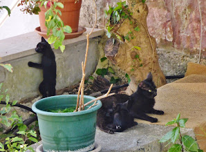 Photo: The hotel kittens - there were three black ones and one striped one - maybe the mama cat wonders where he came from?
