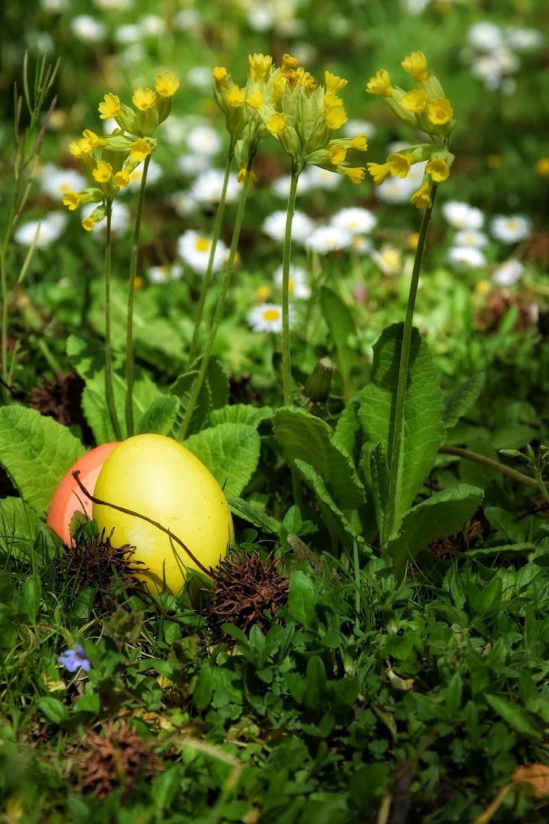 Buona Pasqua di fifibz
