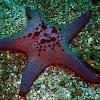 Honeycomb Cushion Star