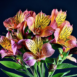 Lilies #6 by Jim Downey - Flowers Flower Arangements ( orange, green, black, yellow, purple )
