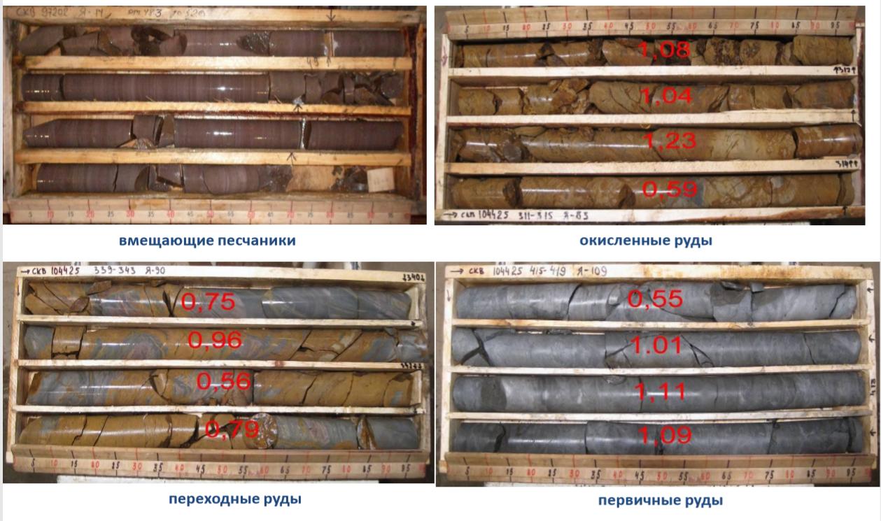 Вмещающие породы и руды месторождения Гросс