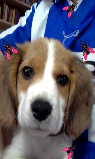 Selfie Dog for Pets