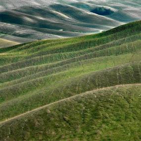 Tuscany II. by Jure Kravanja - Landscapes Prairies, Meadows & Fields