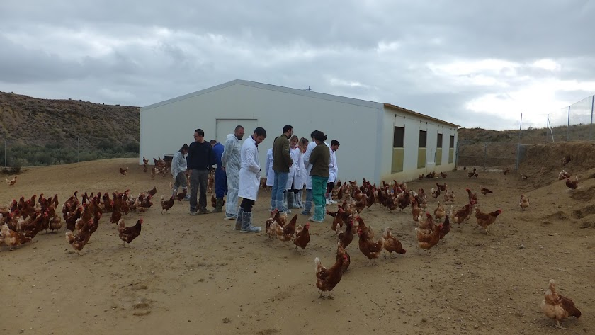 Un momento en la visita a la granja de gallinas.