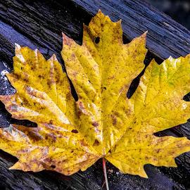 Leaf by Darren Sutherland - Nature Up Close Leaves & Grasses