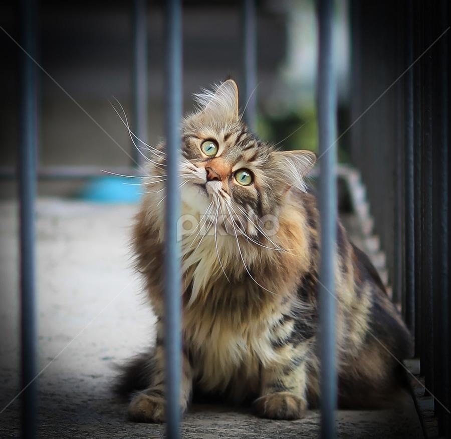 Green Eyes by Cristina Casati - Animals - Cats Portraits