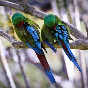 couple.... by Happy Sugianto - Animals Birds