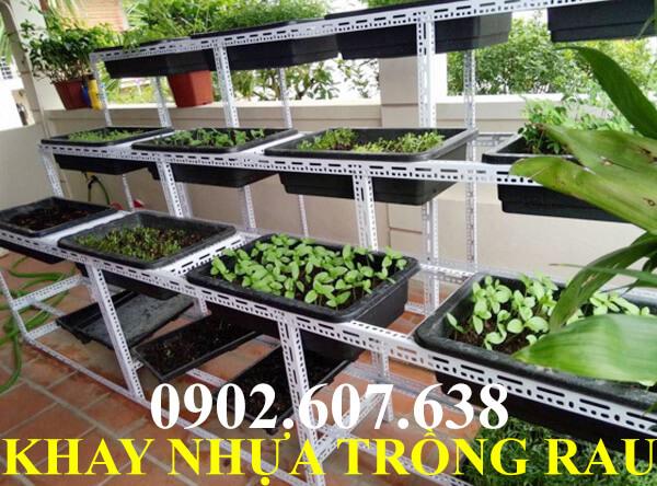 khay nhựa trồng rau tiện lợi