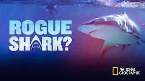Rogue Shark? thumbnail