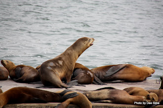 Photo: (Year 3) Day 20 - Seals Sunbathing #4