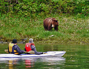 Photo: Kayaking With Brown Bear Grazing on the Shore
