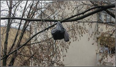 Photo: Calea Victoriei, alee Mr.2 - In preajma sarbatorilor de iarna..in copac, presupus cadou - 2017.12.02  publicat pe facebook comentariu https://www.facebook.com/emil.halastuan.1/posts/10203911413102661