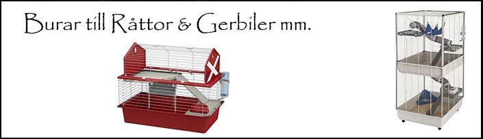 Råtta & Gerbil