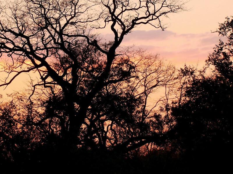 Photo: #183-Coucher de soleil sur le delta de l'Okavango