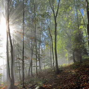 Autumn forest by Zoran Stanko - Landscapes Forests ( tree, autumn, fog, trees, pwcautumn, forest, leaves, landscape, mist )