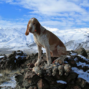 A Chukar Hunting Day by Ralph MInnitte - Animals - Dogs Portraits