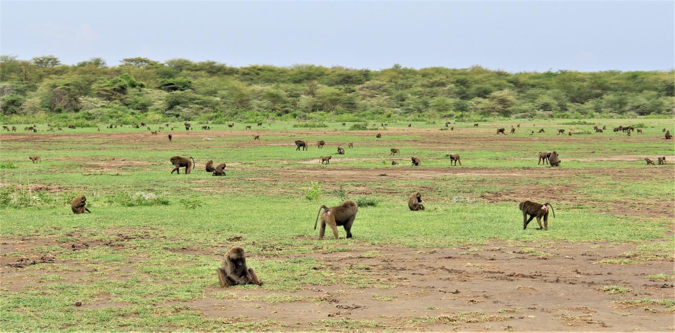 D:\SLIKE\PUTOVANJA\Kenija i Tanzanija 2017\Globeiq izbor\IMG_2607f.jpg