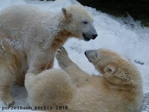 Photo: Knut und Gianna haben Spass miteinander :-)