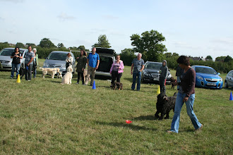 Photo: DogBasics Fun Day 2013 - Naz and Tilly Labradoodle in their winning Contact Slalom. No treats, no lead, no running and Tilly kept focused on Naz all the way through...